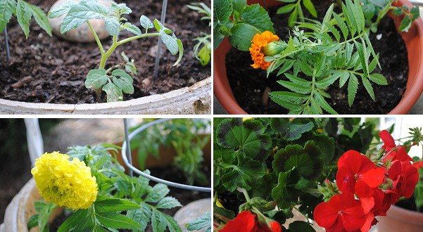 Spring 2011 Edible Garden