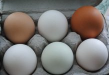 Hen Eggs | My Halal Kitchen Pantry