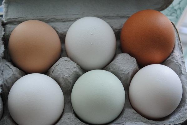 Hen Eggs | My Halal Kitchen Pantry