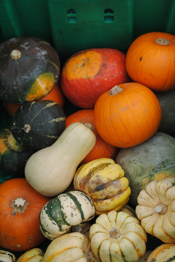 Fall Gourds at the Green City Market