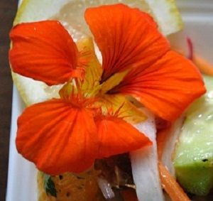 Summer Mediterranean Salad with Citrus, Dates & Nasturtium Flowers