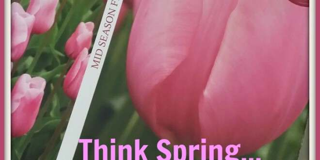 Weekend Garden Project: Tulip Planting