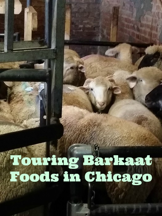 Touring Barkaat Foods in Chicago