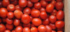 box of sicilian tomatoes