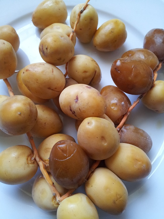 Fresh Barhi Dates | My Halal Kitchen