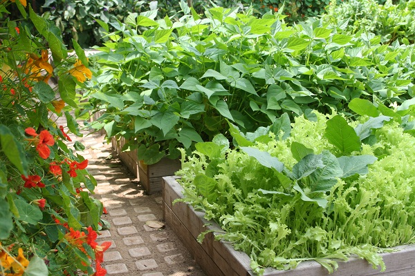 Edible Gardening Resources