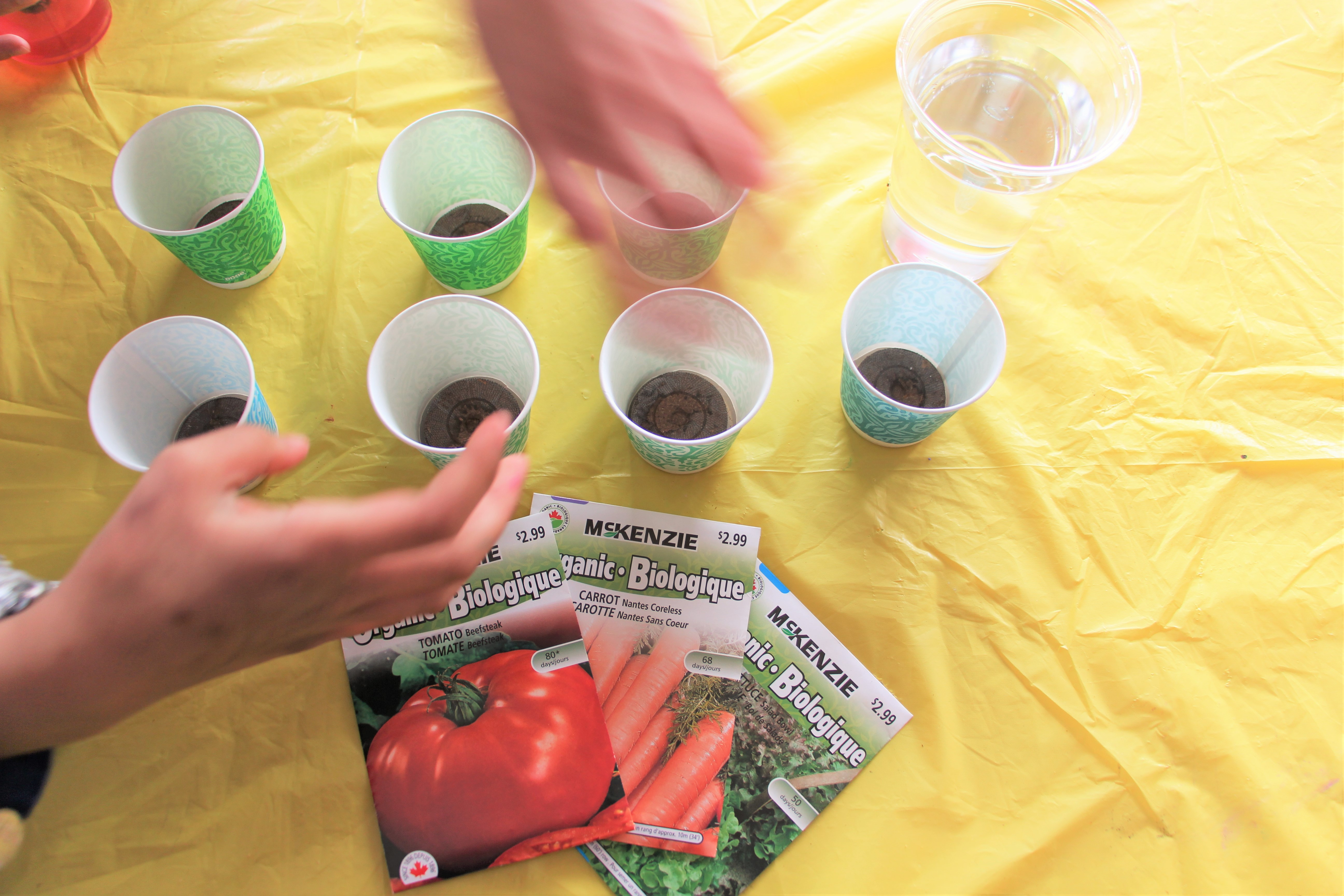 spring party planting seeds